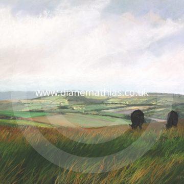 Gwartheg Du ar Mynydd Llanllwni