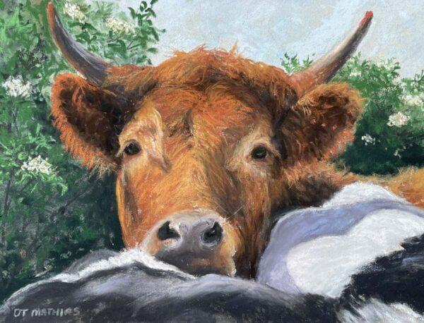 Buwch Goch (Red Cow)